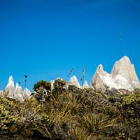 <strong>Eine karge und niedrig wachsende Pflanzenwelt umgiebt diese Bergriesen aus Fels und Eis</strong>