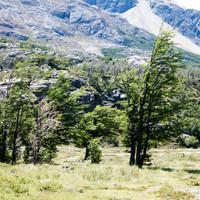 <strong>Die Pflanzenwelt zeigt <strong>in ihrer Wuchsform</strong>deutliche Windzeichen</strong>