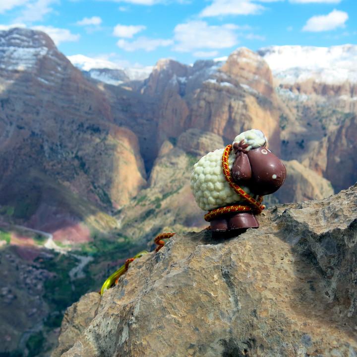 <strong>Den Ostermontag hat unser Kletterschaf leider nicht mehr überstanden.</strong><span class=>© Martin Pühringer</span>