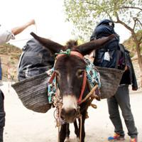 <strong>Geduldig lässt sich unser Esel mit dem schweren Gepäck beladen.</strong><span class=>© Stefan Leitner</span>