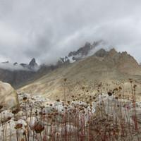 <span><strong>Gletscherflora</strong><span class=>© Timo Moser</span></span>