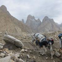 <span><strong>Wer noch nie einen Esel auf einem Gletscher gesehen hat, der sehe und staune jetzt</strong><span class=>© Timo Moser</span></span>