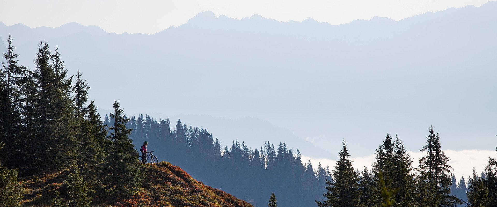 Mountainbiker in den Bergen mit traum Aussicht und rot herbstlichen Heidelbeerstauden