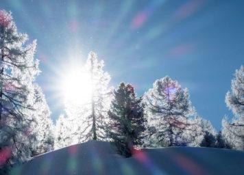 Thumbnail http://Sonnenstrahlen%20im%20eingeschneiten%20Baum%20mit%20Reif%20an%20den%20Nadeln